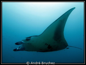 Manta... by Andr&#233; Bruchez 